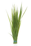 Rye Grass Stock Photography