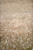 Rye Grass Stock Photos