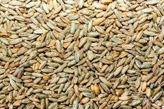 Rye light malt. Background made of closeup of light rye malt grains stock photo