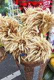 Rye sheaf in big vase. Royalty Free Stock Photography
