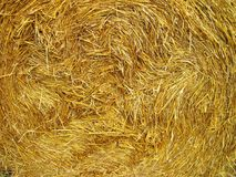 Rye straw texture suitable as background. Autumn dry rye in rick after yield taking of royalty free stock images