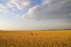 Rye at sunset Stock Image
