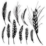 Rye, Weizen Lizenzfreie Stockfotos