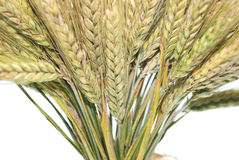 Rye. Wheat ears isolated on white background Royalty Free Stock Photography