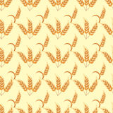 Rye wheat harvest vector seamless pattern. Stock Images