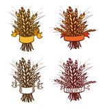 Rye, wheat Stock Image