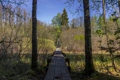 Ryfors Gammelskog pathway Royalty Free Stock Photo