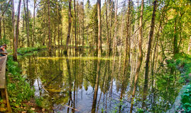 Ryfors water mirror Royalty Free Stock Images