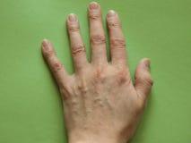 rygg- sikt av handen över gräsplan Fotografering för Bildbyråer