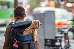 Ryggsäcken för man` s har en hundinsidabaksida Royaltyfria Bilder