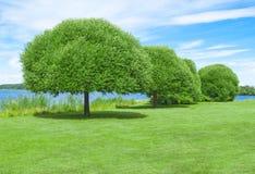 Rymlig grön gräsmatta med härliga träd Arkivbild