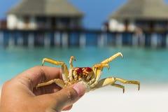 Rymma krabban i handen Arkivbilder