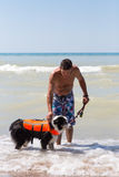 Rymma på hund i en flytväst på stranden arkivbild