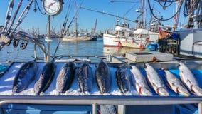 rynek rybny Zdjęcia Stock