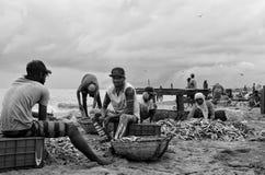 rynek rybny obraz stock