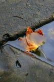 rynnowy liści, Obraz Stock