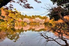 Ryoanji gardens, Kyoto Royalty Free Stock Photo