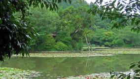 Ryoanji Temple pond in Kyoto. Waterlily pond in Ryojan ji in Kyoto Japan Stock Image