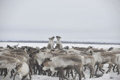 Rysk arktisk aboriginer Royaltyfri Foto