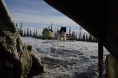 Rysk arktisk för infödd familj i dess stuvade hus - kamrat! royaltyfri foto
