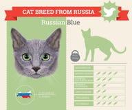 Rysk avelinfographics för blå katt Arkivbilder