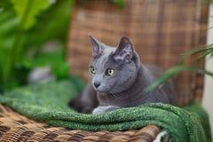 Rysk Blue arkivfoto