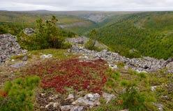 Rysk natur Arkivfoton