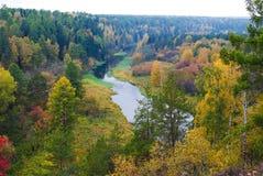 Rysk skog Arkivbild
