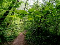 Rysk skog Arkivbilder