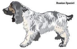 Rysk spanielvektorillustration Royaltyfria Bilder