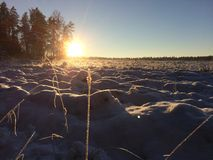 Rysk vinter Royaltyfri Fotografi