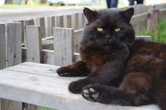 Ryska katter Royaltyfria Bilder