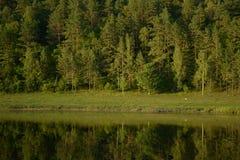 Ryska skogar Arkivbild