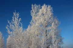 Ryska träd för snö för den vinterSibirien skogen snöar den dolda björken för vägsnöfrost som snövita träd skidar spår i snön stock illustrationer