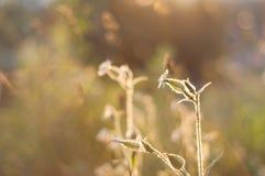 Ryska vildblommor på solnedgången, ställe för text Fotografering för Bildbyråer