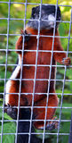 Ryski zoo zdjęcia stock