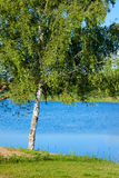 Ryskt landskap för sommar med en björk nära Volgaet River Arkivfoto