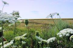 Ryskt sommarfält Royaltyfri Fotografi