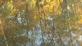 Rysować na powierzchni woda Odbicie jesienni drzewa w wodzie rzeka zdjęcie wideo