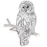Rysować sowa na gałąź Obraz Stock