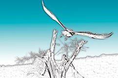 Rysować zafascynowany orła latanie na gałąź Obrazy Royalty Free