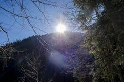ryss för ossetia för berg för alaniacaucasus federation nordlig norr panorama för caucasus liggandeberg Solnedgång bak stora träd Royaltyfria Bilder