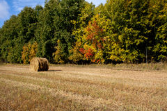 Ryss Sibirien Autumn Hayfield Village fotografering för bildbyråer