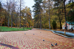 Ryssland Kislovodsk Semesterorten parkerar i Kislovodsk Arkivfoto