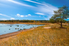 Ryssland Sörja på den sandiga kusten av golfen av Finland Royaltyfri Foto