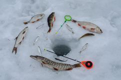 Ryssland vinterfiske, isfiskekonkurrenser, bas, fiskeask, redskap, is, vinter, flod, vinterlandskap, fiske, issc Royaltyfria Bilder