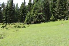 RyssSibirien berg Altai Royaltyfria Bilder