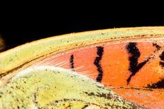 Rysunki na skrzydle motyl jako tło Zdjęcie Stock