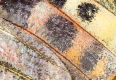 Rysunki na skrzydle motyl jako tło Fotografia Royalty Free