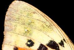 Rysunki na skrzydle motyl jako tło Fotografia Stock